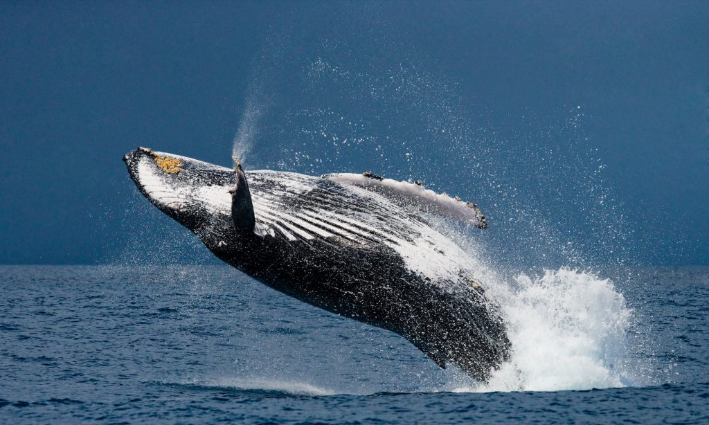 Whales on the Way