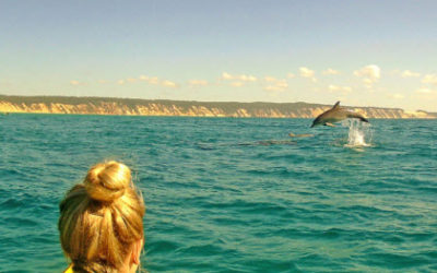 Kayak with the Dolphins